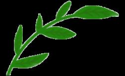 logo blad transparant