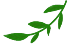 logo blad transparant gedraaid